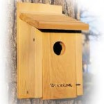 simple bluebird house